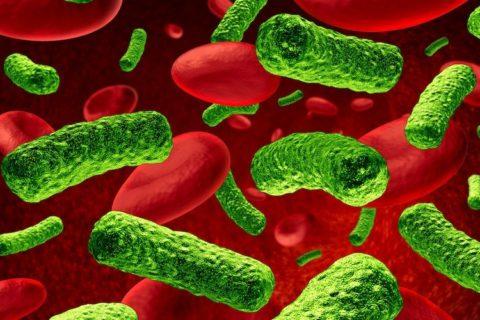 Böbrek Nakil Hastaları Enfeksiyondan Korunmak İçin Nelere Dikkat Etmeli